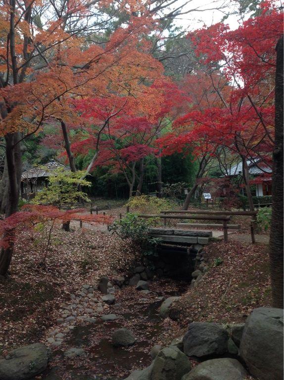Yokohama Sankeien Garden #紅葉 #Japan #Yokohama #Autumn #Leaves #三渓園