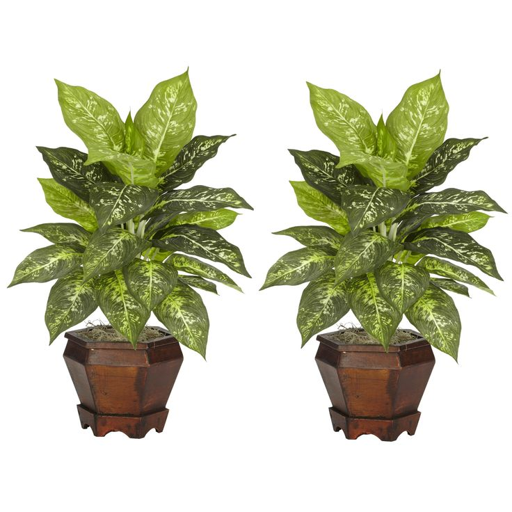 "The sharp contrasts of the two-tone leaves will definitely draw the appreciative plant lover's eye from anywhere in a room. The bold leaves that make up these silk plants are ""large and in charge"", and are coupled with an equally impressive planter. Easy to take care of and effortless to manage, this is one set of plants that you'll want to add to your collection. Arrives with two pieces."