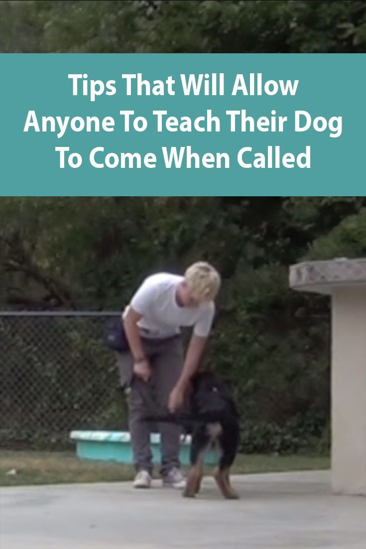 Teach Dog To Come When Called Dog Clicker Training Dog Training