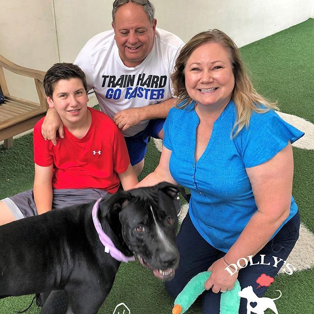 Dollys Dream Dog Beans Was So Excited When He Recently Got Adopted From The Humane Society Of Broward County This Big Humane Society Adoption Broward County