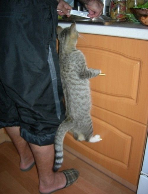 i wanna see: Kitchens, Tuna, Drawers Pulled, Funnies Cats, Pet, Dinners, Kittens, Kitty, Animal