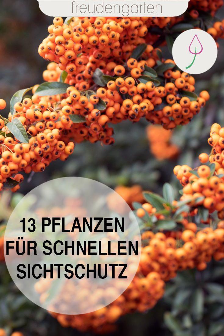 Sichtschutz im Garten mit schnell wachsenden Pflanzen u2013 e1coolfurnitures site ~ 01075335_Sichtschutz Garten Ideen Pflanzen