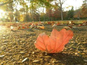 Seasons of Change - Nicole Querido