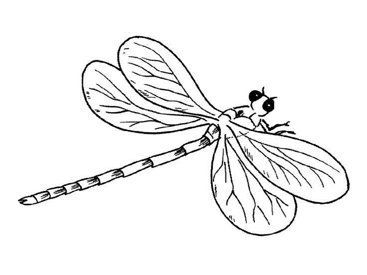 53 best Insekten Kleurplaten images