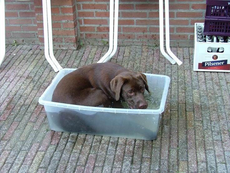 Hond met privé zwembad