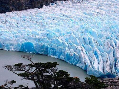 Glaciar & Araucaria, sur de Chile