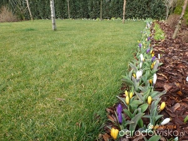 Ogrodnik Mimo Woli cd - strona 2166 - Forum ogrodnicze - Ogrodowisko łan krokusów