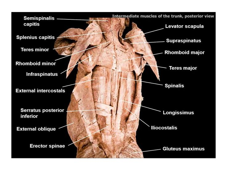 nerves in neck and shoulder diagram 2005 silverado wiring pin by dehis mesd47 on app anatomy for omfs   pinterest