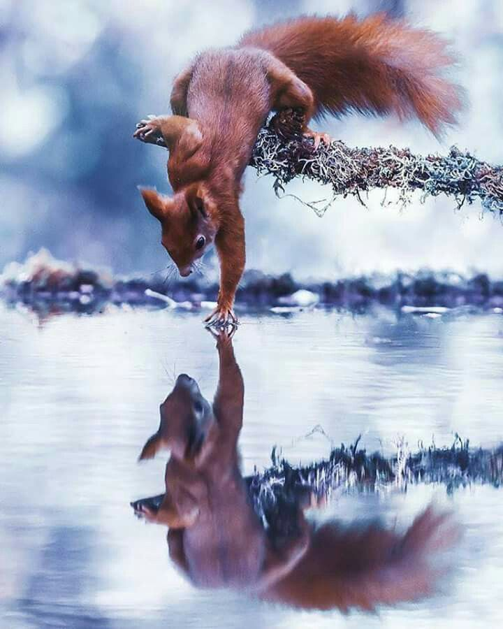 Pin By Berta Ray On Beauty Of Animals With Images Animals Beautiful Animal Photography Animals