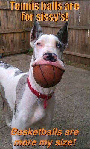 great dane meme basketball ball