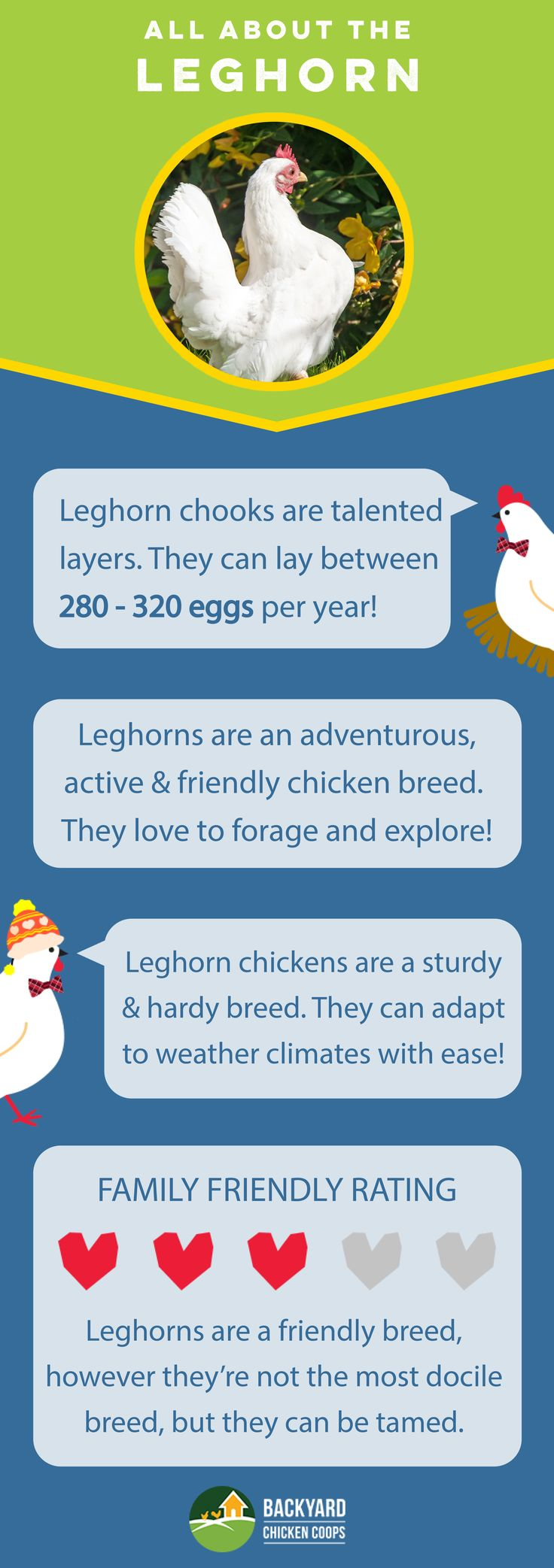 Leghorn chickens are an overall awesome backyard breed! They are egg-ceptionally great layers, have active and energetic personalities and are hardy chooks. Check out their breed profile here, http://www.backyardchickencoops.com.au/breed-profile-leghorn/ #loveyourchickens #inforgraphic #leghornchickens
