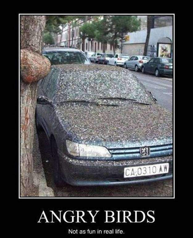 angry birds not as fun in real life