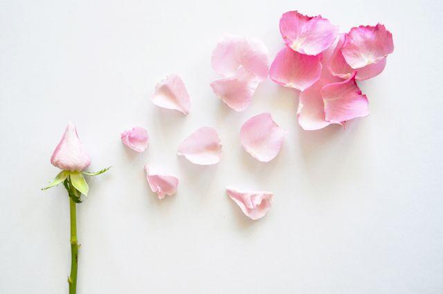 adoro FARM - floriografia: rosa