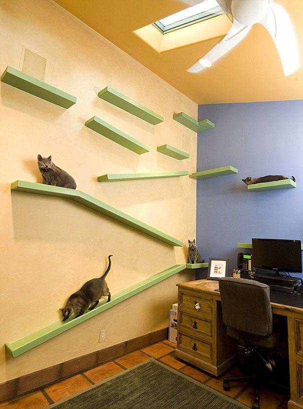 ein katzenliebhaber baut f r euro sein haus um weil wir tiere lieben. Black Bedroom Furniture Sets. Home Design Ideas