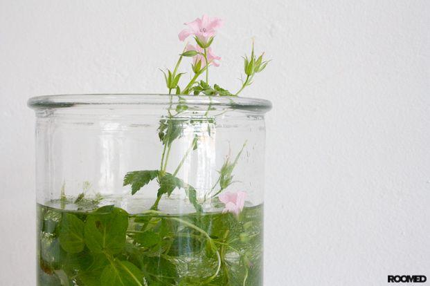 DIY: je eigen mini watertuin - Roomed