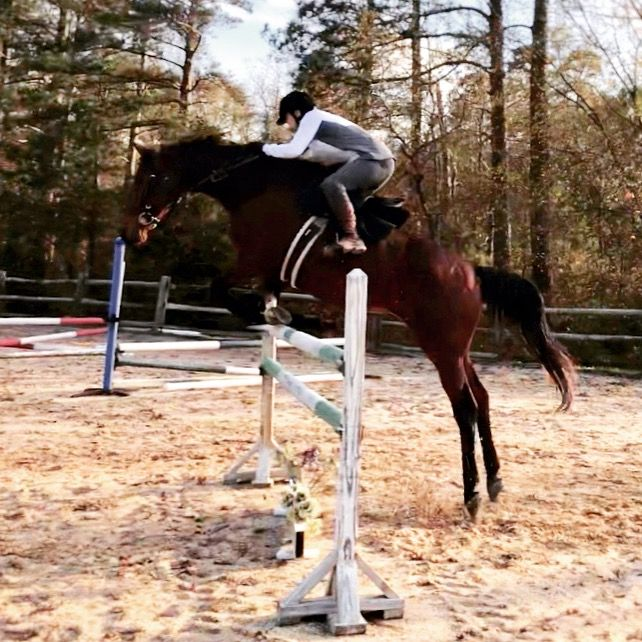 Jumping Jameson! Love this horse