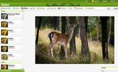 Ribbet: potente editor de imágenes online y gratuito