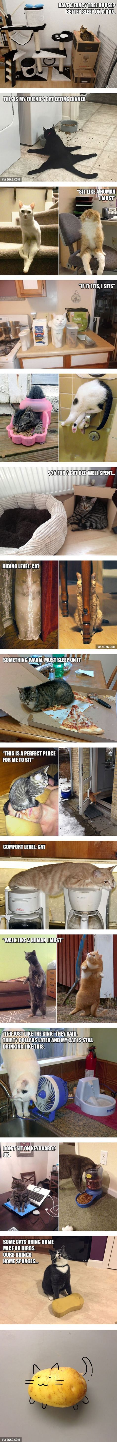 20 Funny Examples of Cat Logic  too funny, I can't even