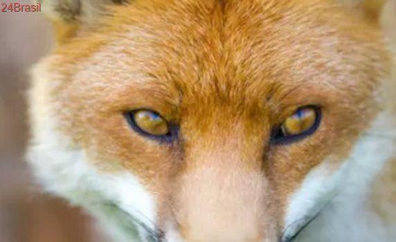 Ativistas pelos direitos animais exigem proibição de armadilhas na Escócia