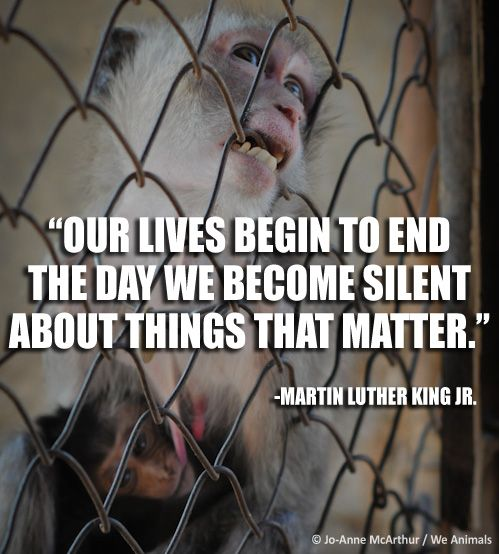"""In memory of Martin Luther King, Jr.'s """"Dream"""" speech, let freedom ring for EVERYONE!  SHARE this if you will NEVER BE SILENT about animal abuse!   Photo Credit: © Jo-Anne McArthur / We Animals  http://www.peta.org/features/martin-luther-king-jr-and-animal-rights.aspx"""