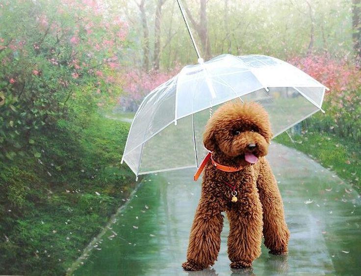 Usado Nylon Transparente Guarda chuva Ao Ar Livre Produtos Para Animais de Estimação Do Cão de estimação Anti Chuva e Sol Frete Grátis em Guarda-chuvas de Casa & jardim no AliExpress.com | Alibaba Group