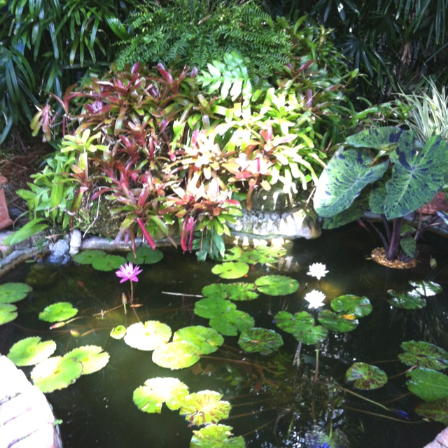 7 best ponds images on pinterest water features for Best plants for outdoor fish ponds