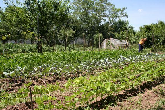 Azienda agricola Cassani | Genuina Gente  #ParcoAgricoloSudMilano #GenuinaGente #produttorisostenibili #filieralocale #filierasostenibile #nuovagricoltura #ortaggi #frutta