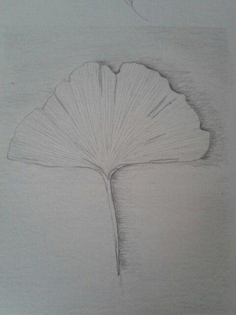 Hoja de gingko - lapiz - curso dibujo botanico de Marta Chirino- made by pececito arcoiris