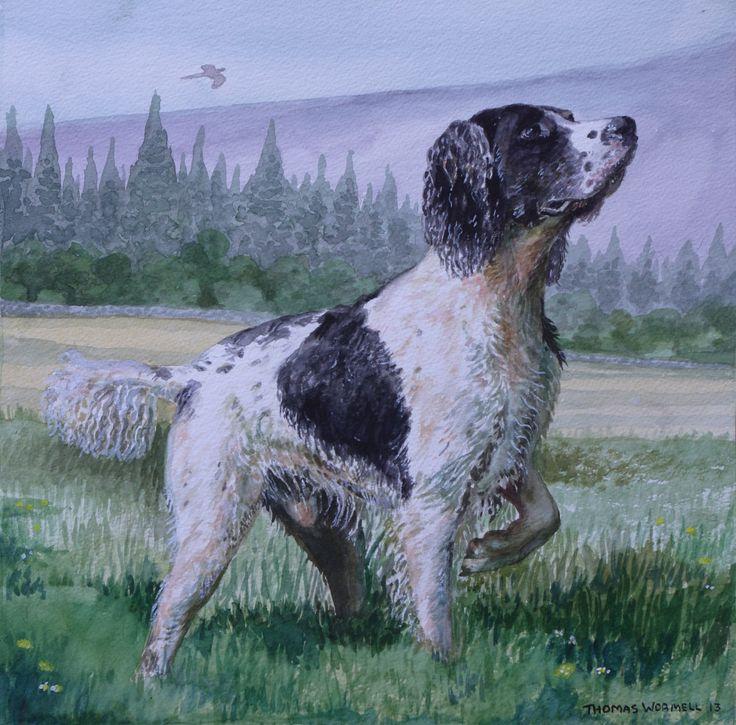 Spaniel - Watercolour byTom Wormell