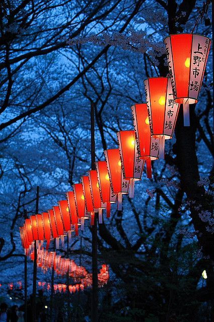 cerisiers du Japon lanternes