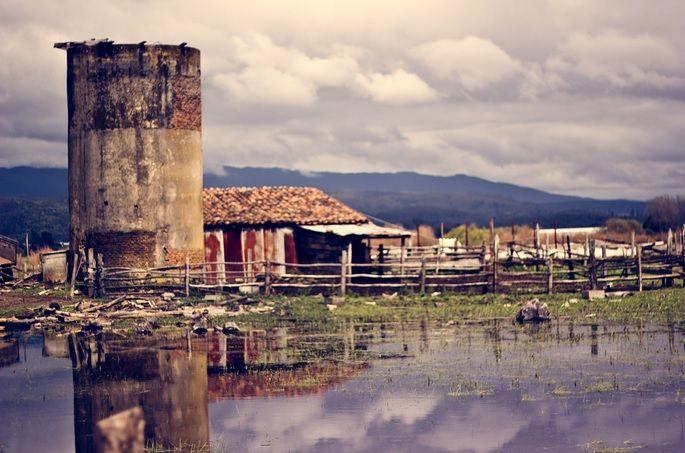 Ramadillas - Arauco