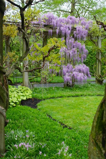 Walking toward the wisteria pergola...