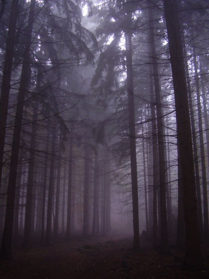 Ködös fenyves