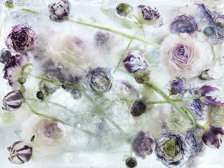 Japanese artist freezes blooming flowers in ice. The results resemble stunning watercolor paintings.