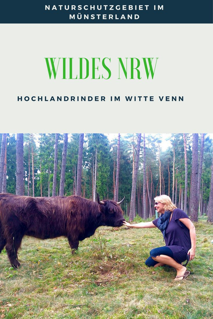 Sicherlich ein ganz besonderer Moment in meinem Leben - das Witte Venn im Münsterland ist einer der Orte im wilden NRW, wo ihr  Hochlandrinter hautnah erleben könnt.