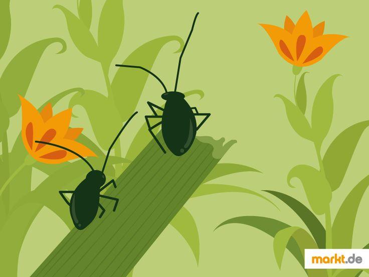🍃 Was tun gegen Blattläuse? | markt.de #blattläuse #schädlinge #hilfe #tipps #garten