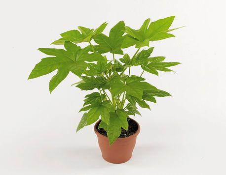 Sju växter som tar bort kemikalier i hemmet.
