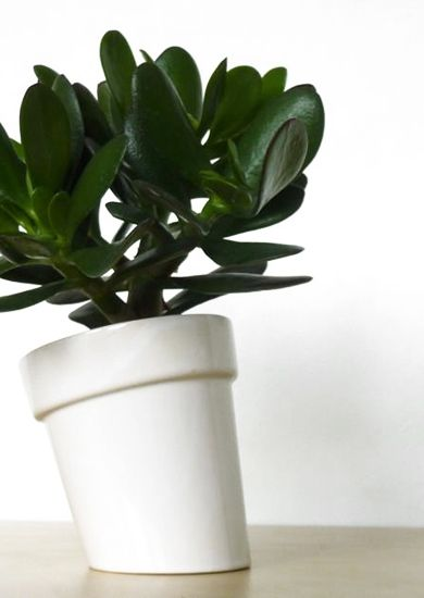 this flowerpot is tilted sideways, so it has the illusion it is falling. great in contrast with a flower or plant,as it will always grow vertical direction. minimalistic design, and use of the archetype flowerpot. great to combine several pieces together for a very playfully effect. normal size to grow medium size plants and herbs. slib-casted in earthenware and finished with a gloss white glaze. #homedecor #flowerpot