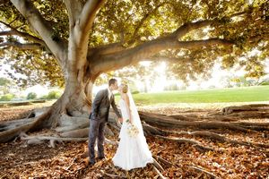 07  best wedding photo locations perth wedding photographers moreton bay fig tree with large roots