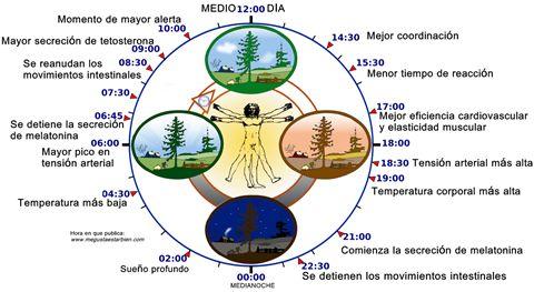 Ritmo circadiano, el reloj que llevas dentro