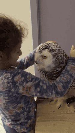 Happy owl and girl Animated GIFs