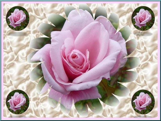 Photo : Nous sommes des roses, dirent les roses.,  Fleurs, Roses, Gravigny, Montages photos. Toutes les photos de Jacqueline DUBOIS sur L'Internaute