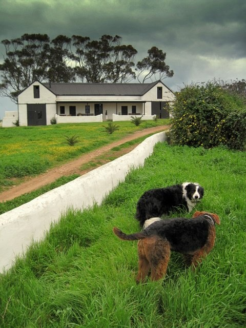 Halfaampies Kraal  is a unique farm in the Overberg region.. http://www.perfecthideaways.co.za/mountain-accommodation/halfaampieskraal-overberg #farms #capetown #accommodation