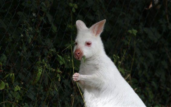 白い野生のウサギの噛み葉 壁紙プレビュー ウサギ 動物 壁紙