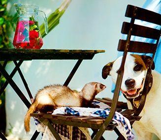 Puravida son 12 bungalows y apartamentos para adultos a los que puedes ir con tu perro gratis en Caños de Meca en Cádiz. Disponen de todo lo necesario para que tu estancia sea inolvidable. Nuestro precioso jardín nos rodea y en nuestra piscina el bañador es opcional