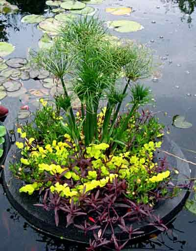 Floating plant island round 8 for the koi pond for Floating fish pond