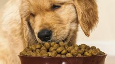 Dry food for the dog: Stiftung Warentest checks 23 products