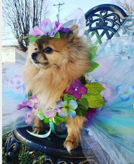My New Line Of Realistic Fairy Pet Costume Dresses Like Us On Facebook Posh Pets Available In All Sizes And Multiple C Pet Costumes Dog Photoshoot Pet Dress
