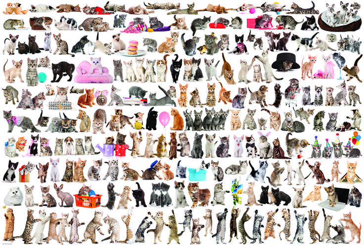EuroGraphics The World of Cats 2000-Piece Puzzle. This 1000-Piece jigsaw puzzle features over 120 cat breeds, which makes for a very cute and endearing puzzle.