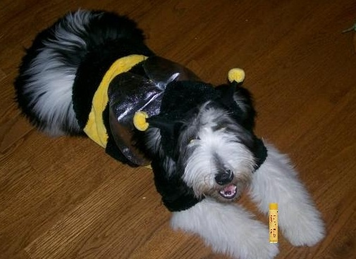 The Raise Your Burt's photo contest is all about the #1 lip balm's search for the #1 fan. Check it out at www.facebook.com/burtsbees #burtsbees    Vote for the ADORABLE dog dressed like a bee under cutest animals